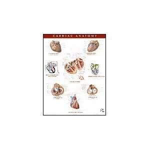 Anatomy Chart, 1e (Netter Charts) (9781929007264): Frank H. Netter MD