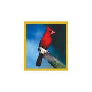 New Magnetic Bookmark Northern Cardinal High Quality