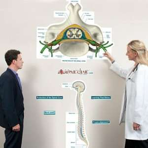 Protection of the Spinal Cord Labeled Sticky Anatomy Wall