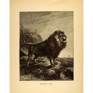 1885 Lithograph Barbary Lion Atlas Nubian Extinct Specie