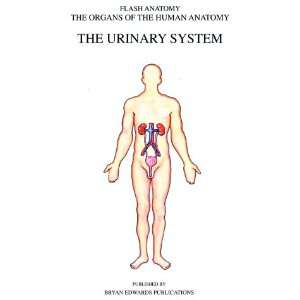 The Urinary System (Organs of the Human Anatomy) (Systems